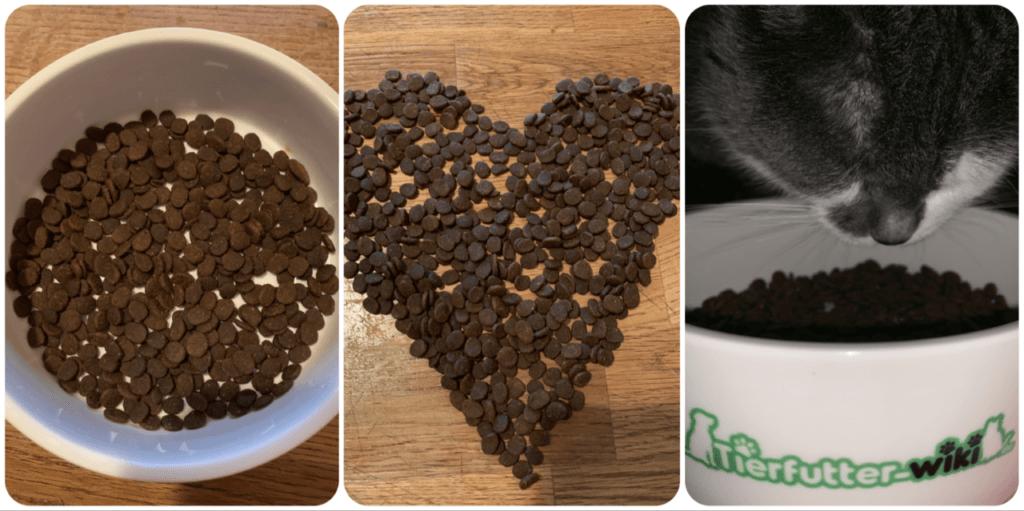 Orijen Trockenfutter für Katzen im Praxistest