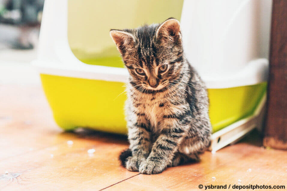 Katze sitzt vor ihrem Katzenklo