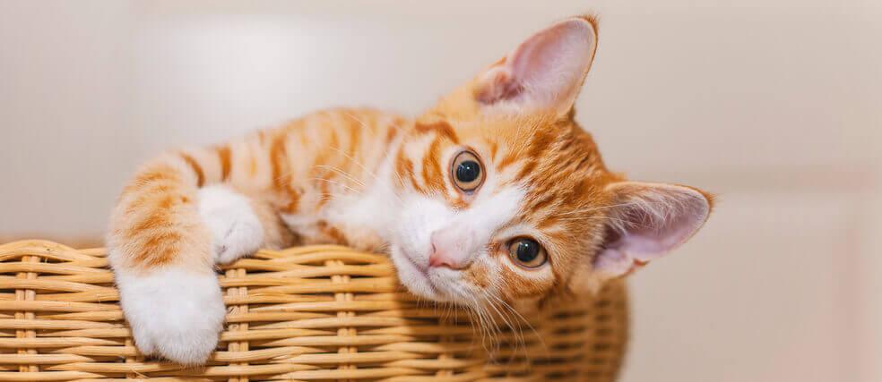 Kitten im Korb